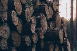 Pile of Logs #06