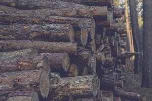 Pile of Logs #07