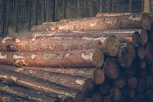 Pile of Logs #08