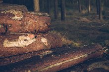 Pile of Logs #10