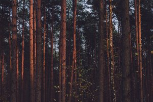 The Forest #11
