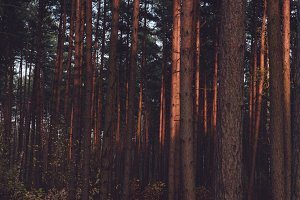 The Forest #09