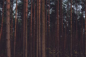 The Forest #10