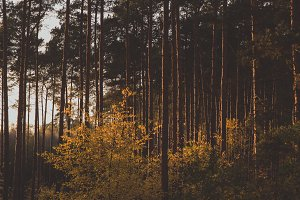 The Forest #12
