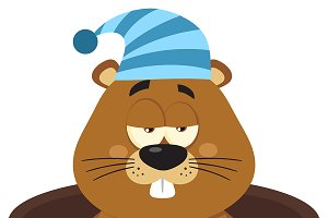 Cute Marmot With Sleeping Hat