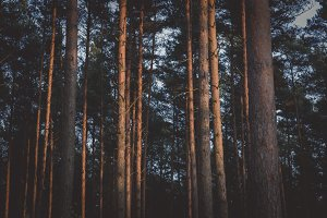 The Forest #18