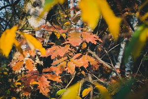Autumn Leaves #01