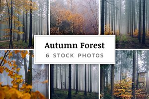 Autumn Forest – 6 Stock Photos