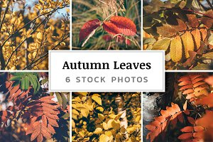 Autumn Leaves – 6 Stock Photos