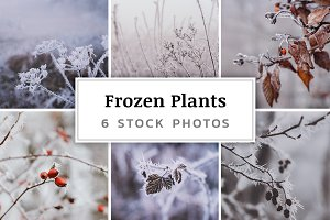 Frozen Plants – 6 Stock Photos