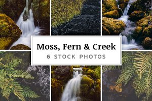 Moss, Fern & Creek – 6 Stock Photos