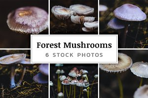 Forest Mushrooms – 6 Stock Photos