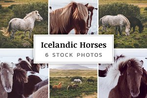 Icelandic Horses – 6 Stock Photos