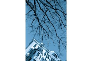 Bare Tree branches over blue sky and fasade of antique building in Moscow City. Blue tint picture