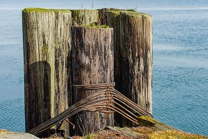 Moss covered pilings