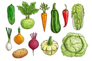 Vegetable isolated sketch set for food design