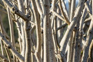 Branches in complex pattern