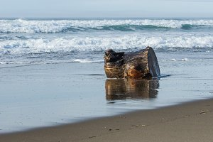 Driftwood log