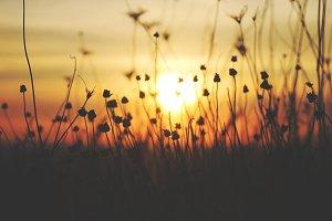 Autumn Sun2