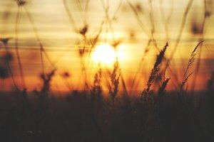Autumn Sun3