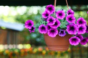 Purple flowerpot