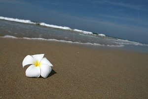 flower and beach