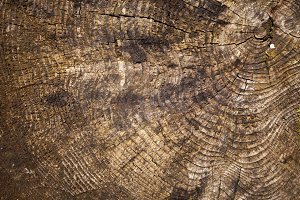 Rough texture of wood