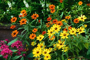 Yellow and Orange wild flowers