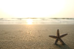 starfish and beach
