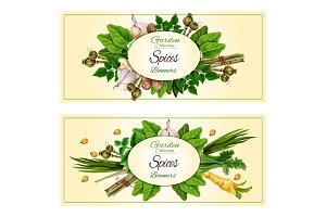 Spices and herbs banner set for food design