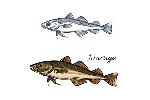Sea fish navaga isolated sketch for food design