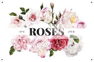 Roses EPS