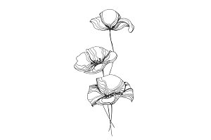 Poppies Flowers Line Art Vector Illustration