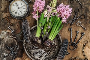 Vintage still life hyacinth flowers