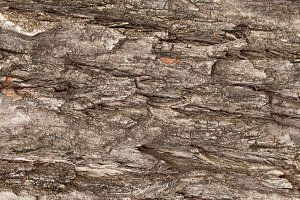 Background striped bark