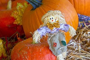 Fall Pumpkin Display with Scarecrow