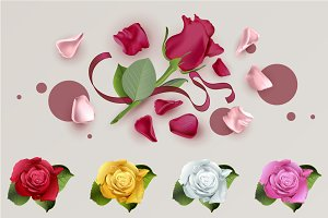 Rose flower petals set