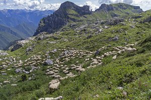 Grazing sheep on a mountain pasture