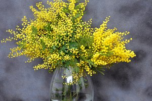 mimosa bouquet on gray background