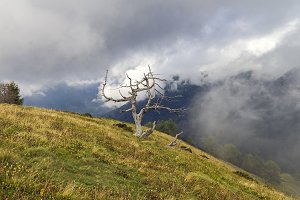 Mountain landscape with dead tree