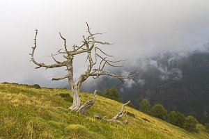 Dead tree on the hillside.