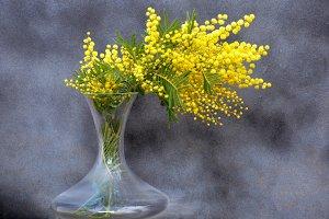 mimosa unusual bouquet in vase