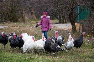 girl graze a flock of turkeys