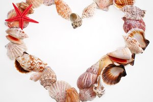 Shells in a shape of  valentine's heart on a white
