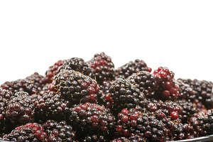 Fresh marionberries isolated