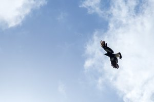 Bird Soaring Overhead