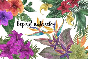 Tropical watercolor