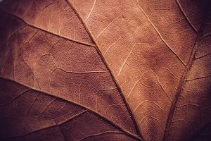 Autumn leaf texture