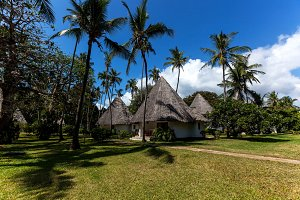 Vacation under palm trees,