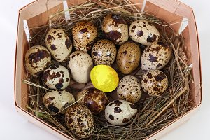quail egg and golden egg in the basket isolated on a white ba